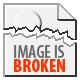 Quad Blue Black Large Fowl Juvenile Brahma